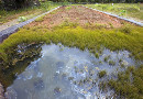 Badania stanu środowiska i remediacja terenów zanieczyszczonych - Arcadis
